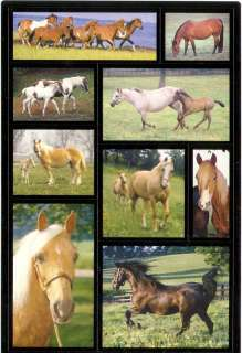 American Greetings Horses Stallions Mare Colts Stickers