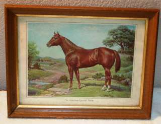 THE AMERICAN QUARTER HORSE BY ORREN MIXER PICTURE